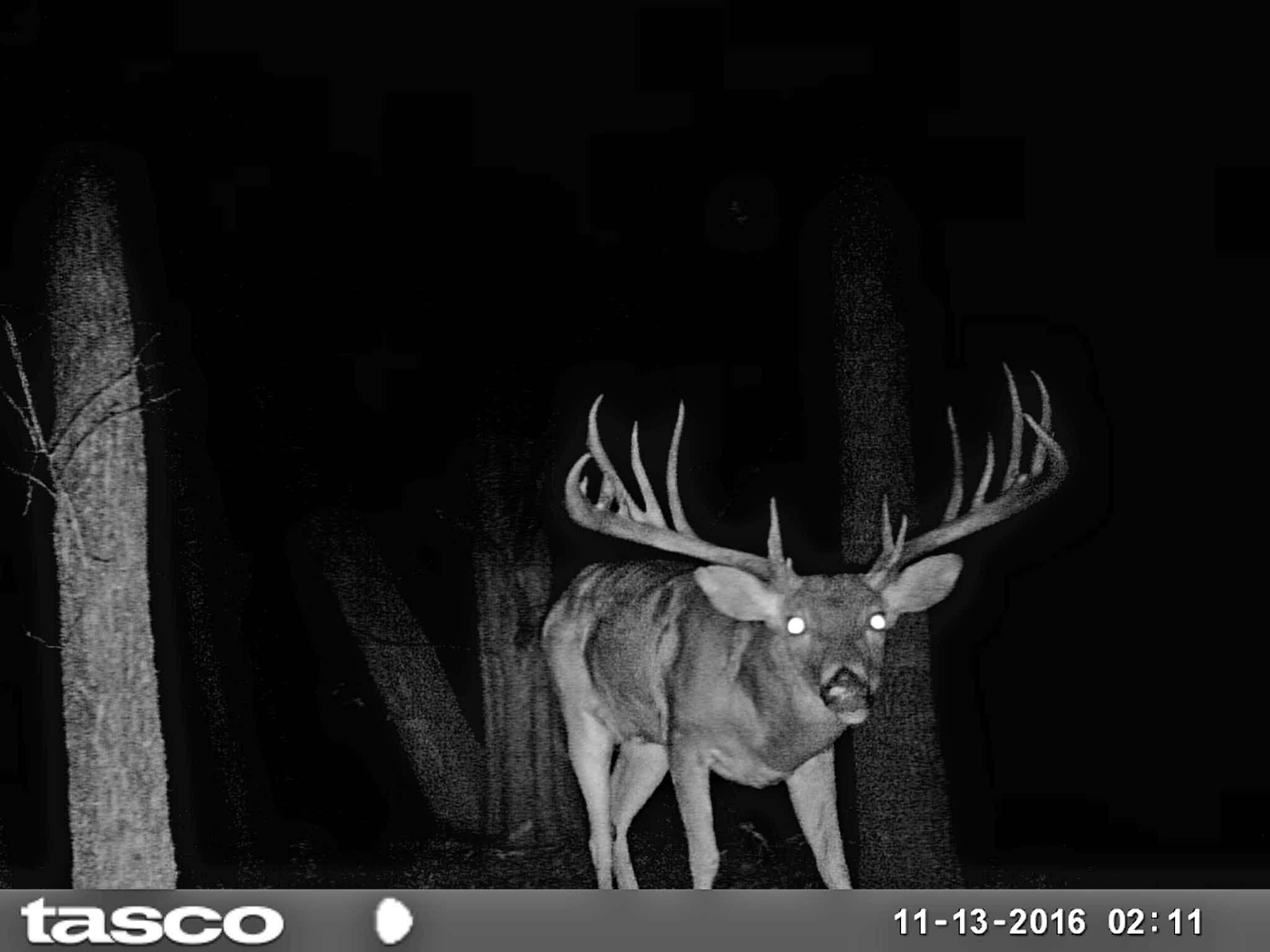 Grayson County Texas Bucks Poached